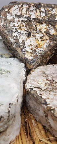 Notre fromager – Camille de chez LACTO VINO aimerait en savoir plus !
